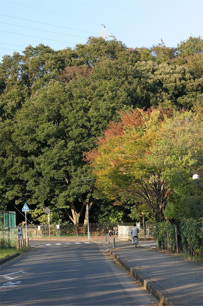 小金原団地ホームページ-21世紀の森と広場
