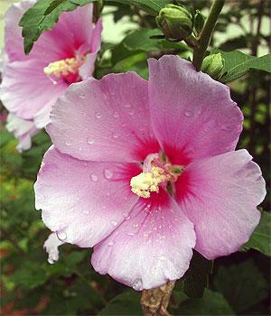 小金原団地のお花