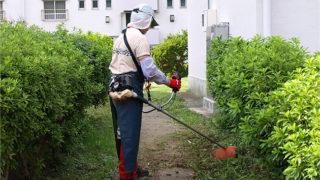 小金原管理組合・自治会合同の芝刈り